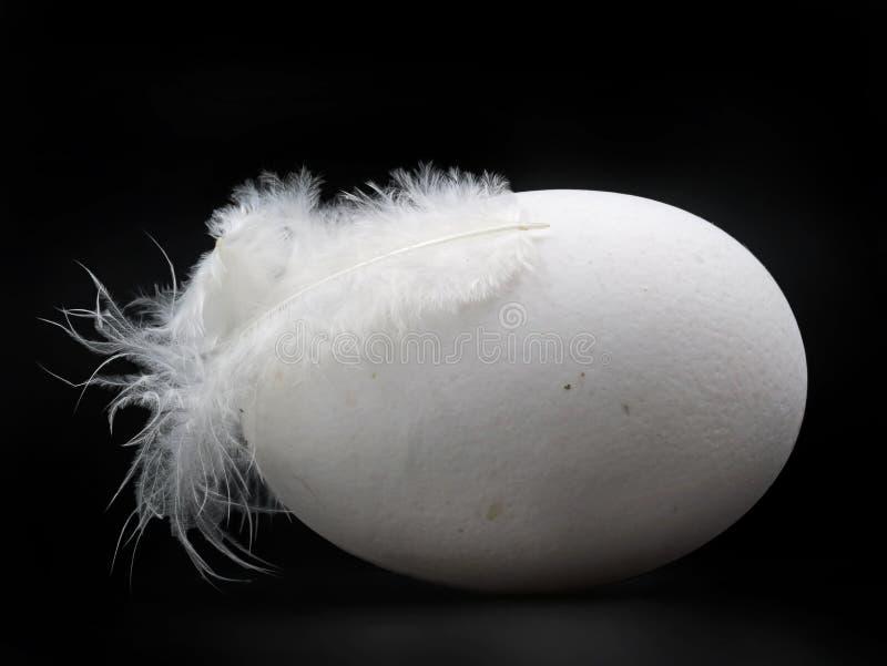 Ovo branco de vista natural com a pena da galinha isolada no fundo preto foto de stock