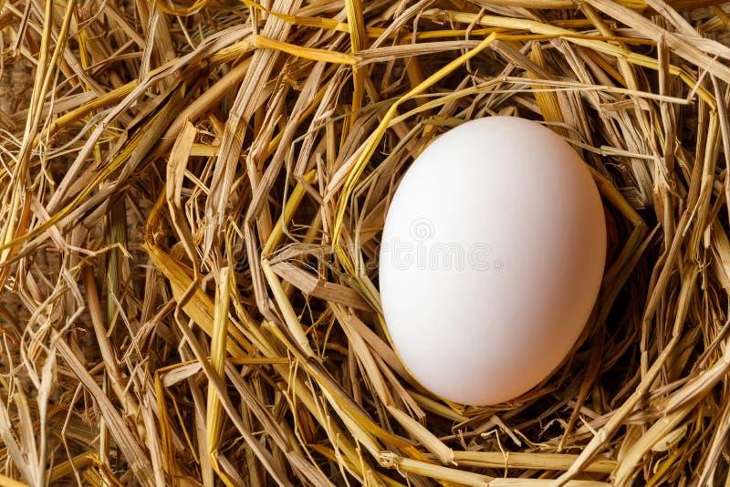 Ovo da galinha ou do pato na palha imagem de stock royalty free