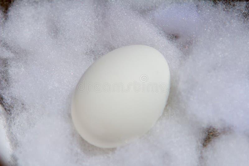 Ovo da páscoa branco do close up no algodão branco em um dia ensolarado imagens de stock royalty free