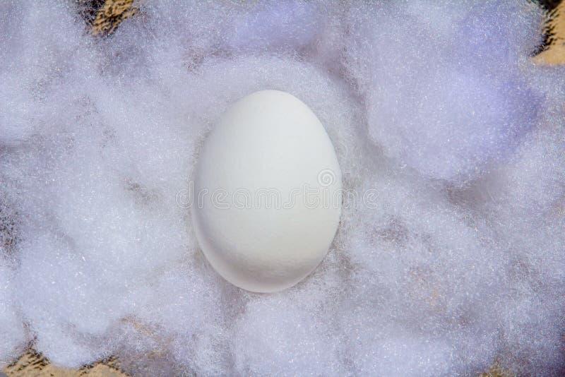 Ovo da páscoa branco do close up no algodão branco em um dia ensolarado imagens de stock