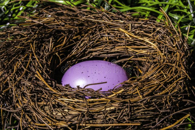 Ovo da páscoa roxo no ninho dos pássaros foto de stock