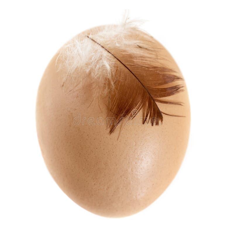 Ovo de Brown com a pena da galinha isolada no branco fotos de stock