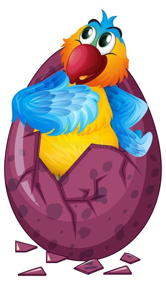 Ovo de choque do pássaro da arara ilustração do vetor