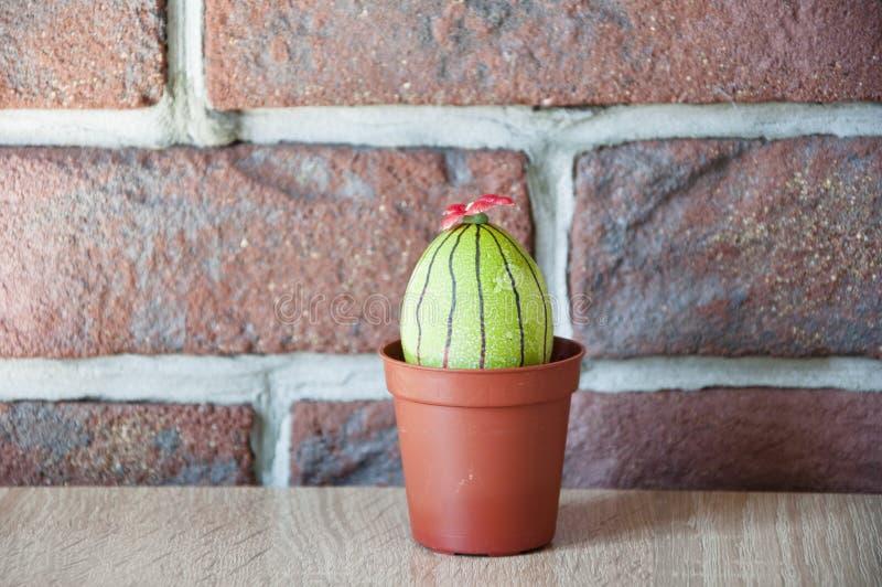 Ovo de Easter Vida verde Loja de flor Caça do ovo cozinhar Ideia incomum Easter feliz Tintura natural DIY e feito a mão Ovo pinta fotos de stock