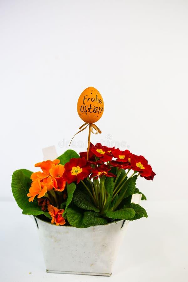 ovo de Páscoa com fórmula, fundo branco; primula num cesto, arranjo de Páscoa, primavera imagem de stock royalty free