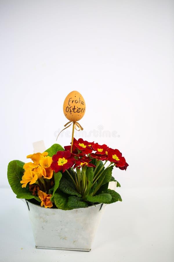 ovo de Páscoa com fórmula, fundo branco; primula num cesto, arranjo de Páscoa, primavera fotografia de stock royalty free