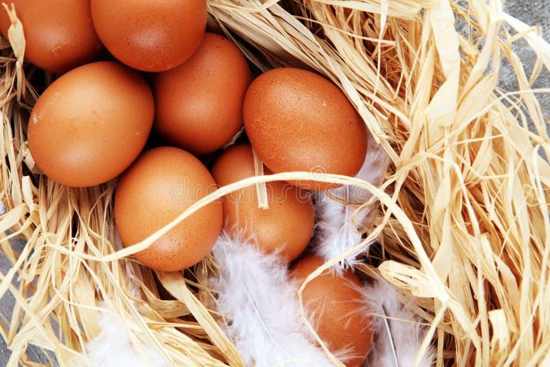 Ovo A exploração agrícola fresca eggs em um fundo rústico de madeira fotos de stock