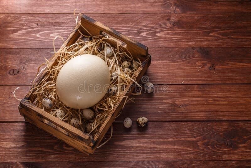 Ovo grande da avestruz na bordadura por ovos de codorniz, copyspace da palha imagem de stock royalty free