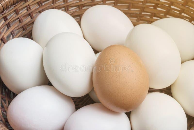 Ovo marrom da galinha do close up na pilha do ovo branco do pato no fundo de madeira da cesta fotos de stock royalty free
