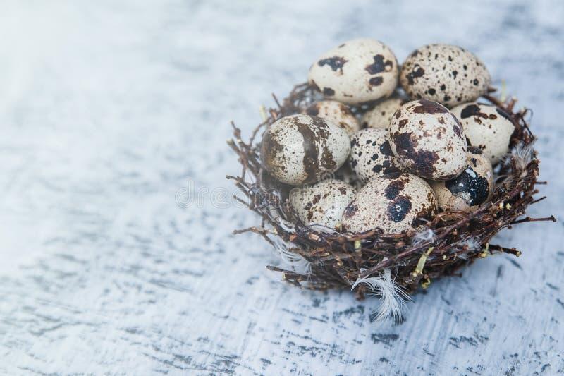Ovos coloridos das codorniz em um ninho no fundo de pedra fotos de stock royalty free