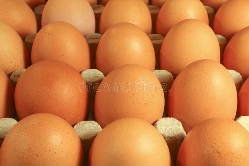 Ovos da galinha fotos de stock