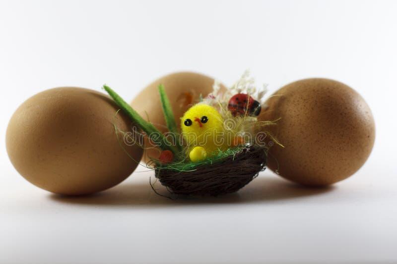 Ovos da galinha ao redor imagens de stock royalty free