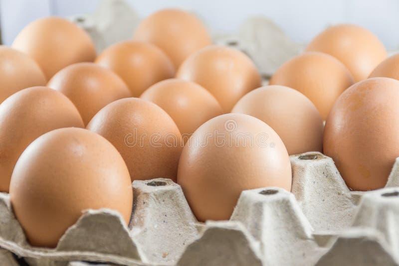 Ovos da galinha de Brown na caixa da caixa de papel foto de stock