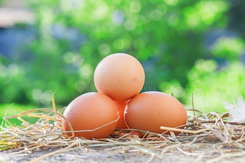 Ovos da galinha na placa de madeira, fotografia de stock royalty free