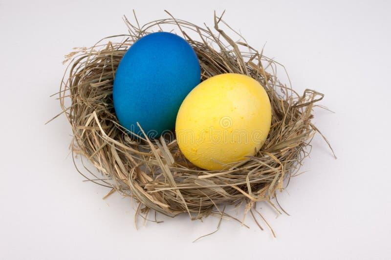 Ovos da páscoa amarelos e azuis no ninho isolado no branco foto de stock royalty free