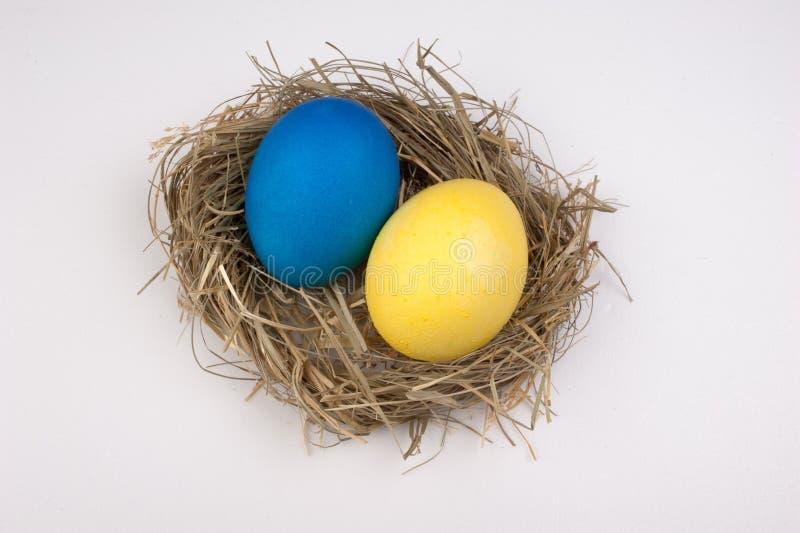 Ovos da páscoa amarelos e azuis no ninho isolado no branco imagens de stock royalty free