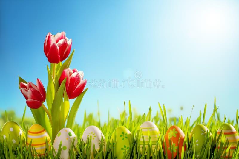 Ovos da páscoa e flor das tulipas no prado fotos de stock royalty free