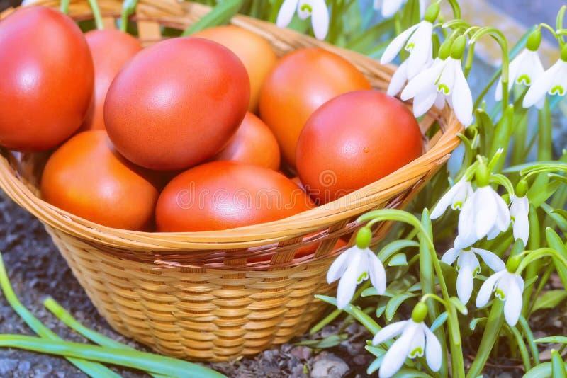 Ovos da páscoa em uma cesta de vime e em snowdrops fotografia de stock royalty free
