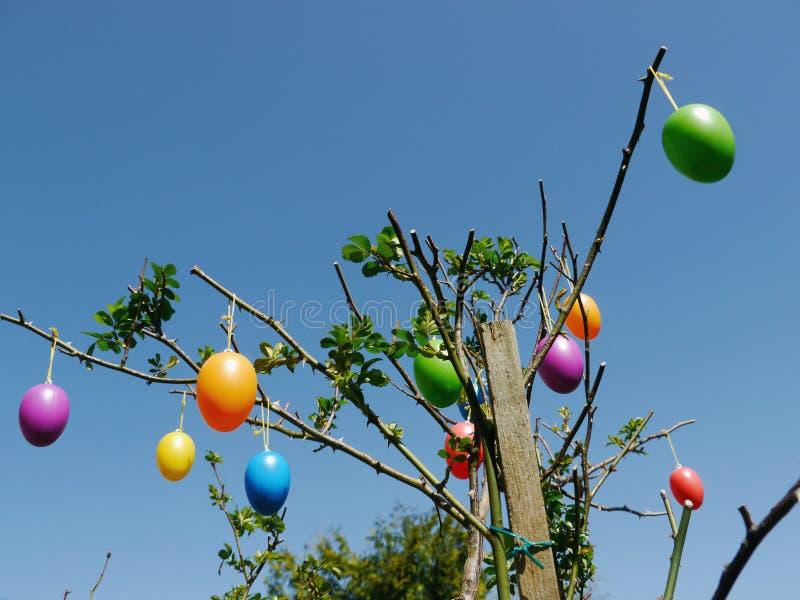 Ovos da páscoa que penduram em uma árvore foto de stock royalty free
