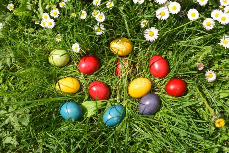 Ovos da p?scoa coloridos na grama verde com as flores brancas da mola fotos de stock royalty free