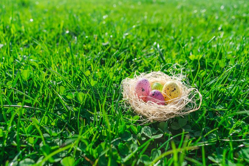 Ovos da p?scoa pontilhados coloridos em um ninho da palha na grama verde e em trevos frescos fotografia de stock