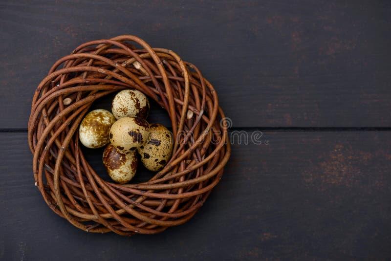 Ovos de codorniz da Páscoa no ninho foto de stock royalty free