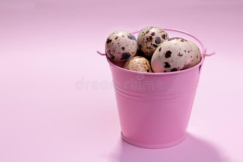 ovos de codorniz em uma cubeta cor-de-rosa decorativa em um fundo cor-de-rosa brilhante fotos de stock