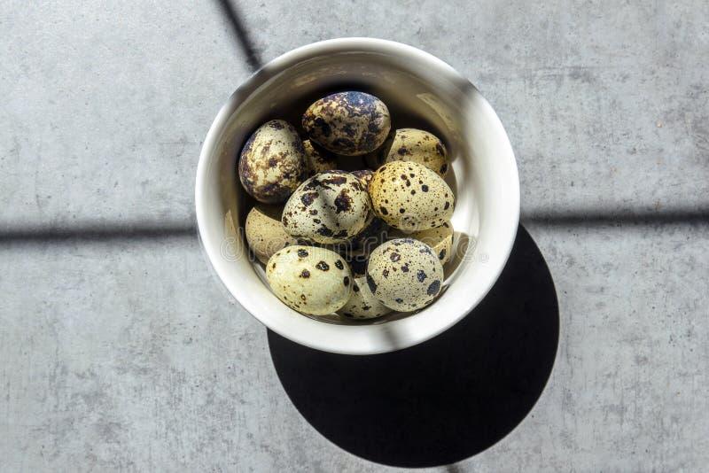 Ovos de codorniz em uma placa branca pequena em um fundo concreto, estando na tabela imagens de stock