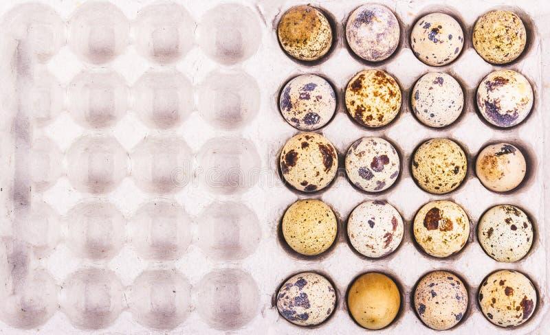 Ovos de codorniz frescos na caixa de cartão Produtos orgânicos úteis dieta do Ovo-vegetariano foto de stock