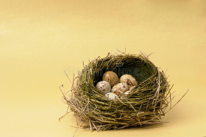 Ovos de codorniz no ninho imagem de stock