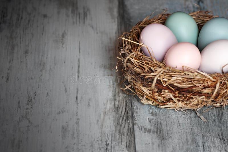 Ovos de easter coloridos em um ninho imagem de stock royalty free