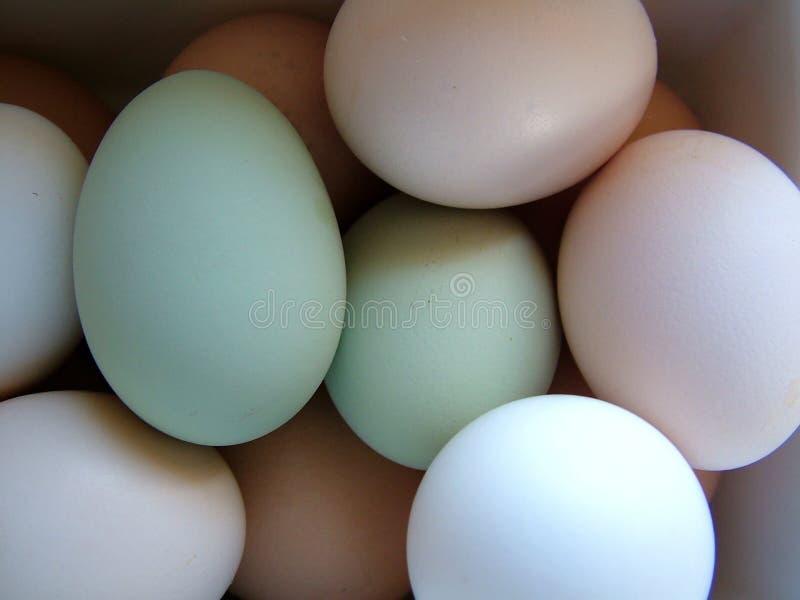 Ovos De Easter Das Naturezas Fotos de Stock Royalty Free