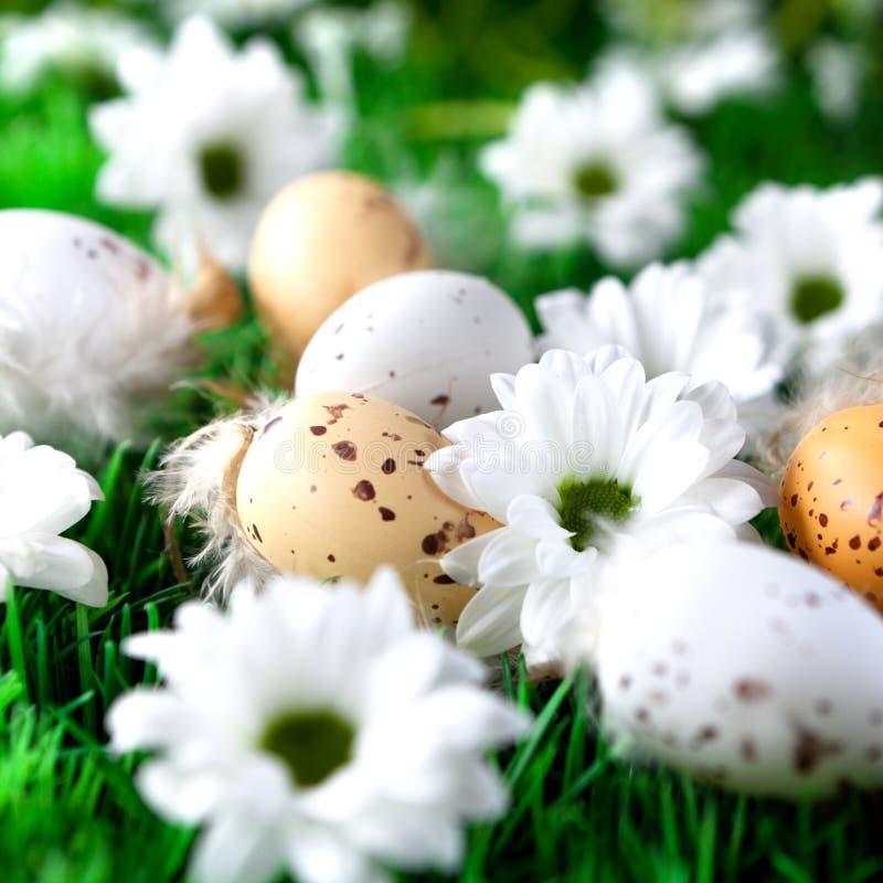 Ovos de Easter e flores da margarida imagens de stock royalty free