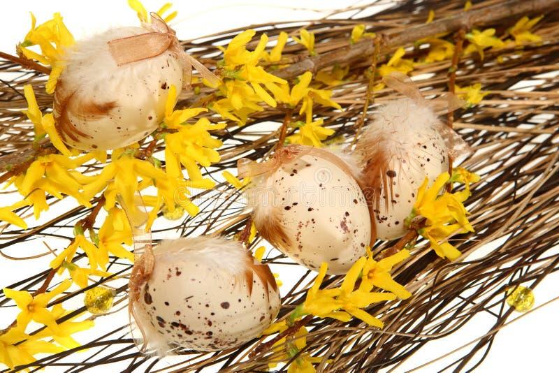 Ovos de Easter em filiais do forsythia imagens de stock