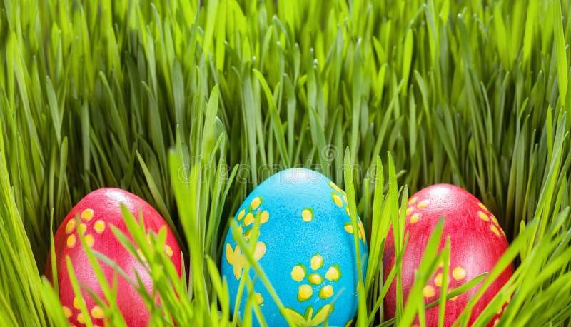 Ovos de Easter na grama verde Conceito da mola imagens de stock royalty free