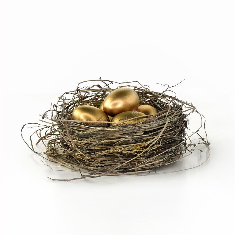 Ovos de ninho da pensão no branco imagens de stock