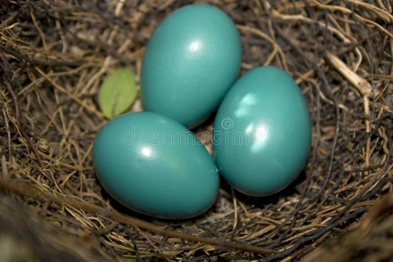 Ovos do Catbird fotografia de stock
