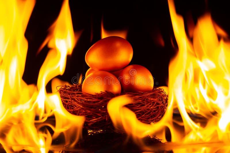 Ovos do ouro no ninho cercado pelo conceito do fogo do risco de investimento imagens de stock