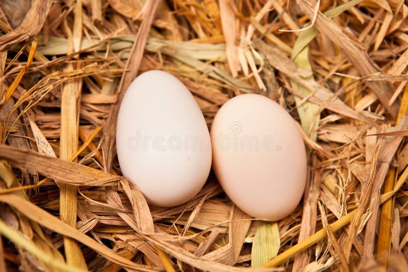 Ovos do reboque na palha fotografia de stock