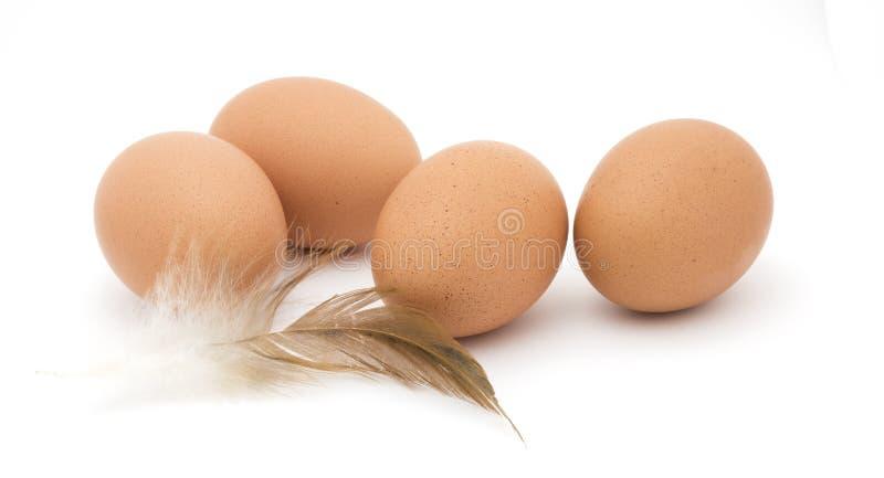 Ovos e pena da galinha de Brown foto de stock royalty free