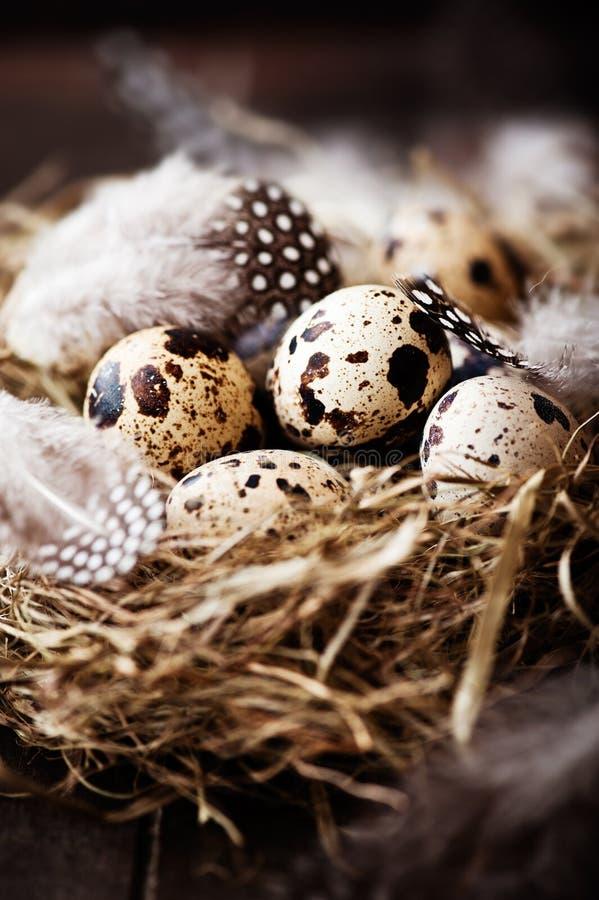 Ovos e penas de codorniz em um ninho de Easter imagens de stock