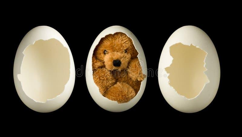 Ovos e urso de peluche vazios foto de stock
