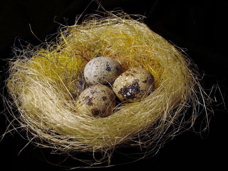 Ovos em um ninho fotografia de stock royalty free