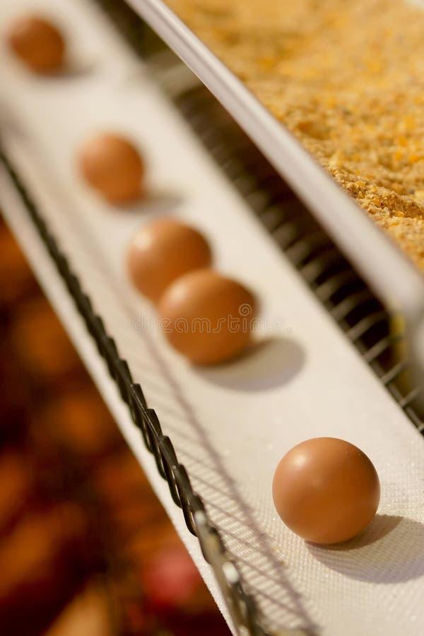 Ovos em uma correia transportadora fotos de stock