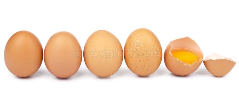 Ovos em uma fileira isolada fotografia de stock