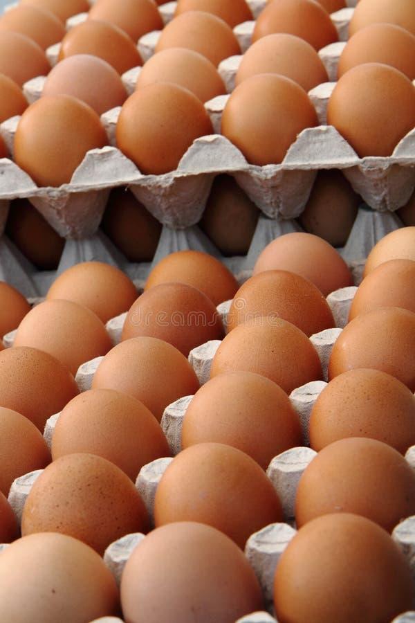 Ovos frescos imagem de stock