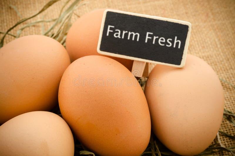 Ovos frescos com a etiqueta de madeira fresca da exploração agrícola fotografia de stock royalty free