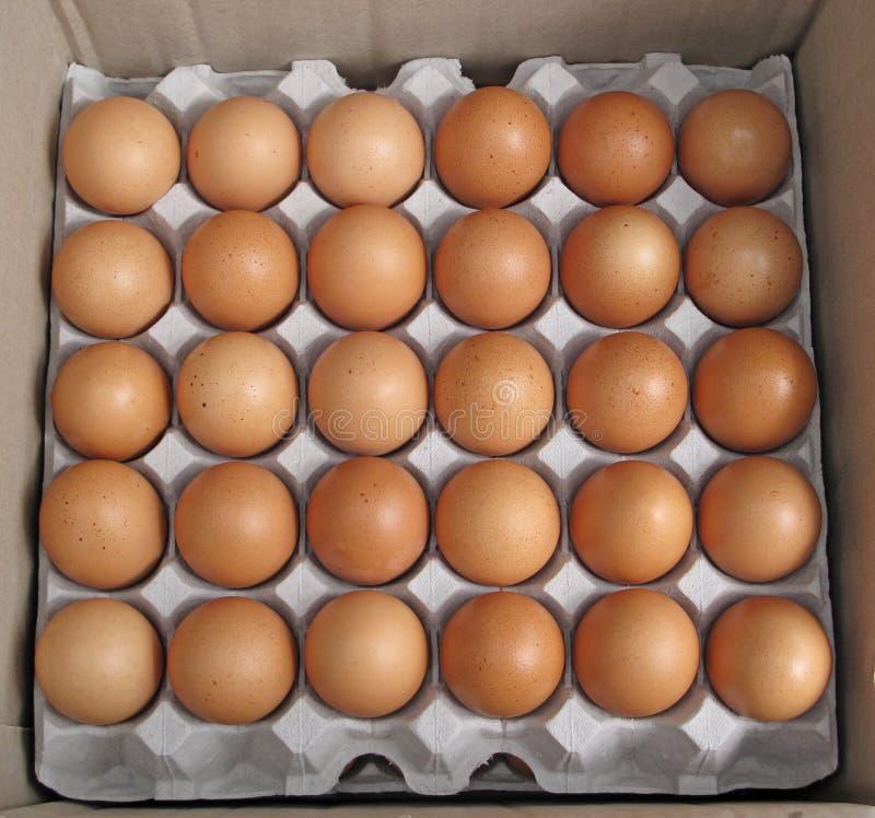 Ovos frescos da exploração agrícola foto de stock royalty free