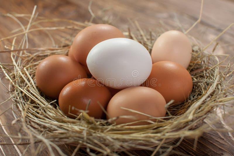 Ovos frescos da galinha da vila no fundo de madeira escuro S?quito da P?scoa foto de stock