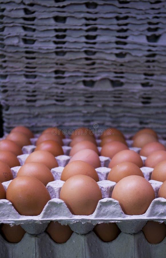 Ovos frescos em bandejas do cartão foto de stock royalty free